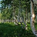 2011 год. деревья на острове, недалеко от ВПП Аэропорта